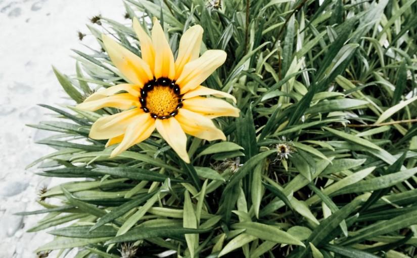 Streetflower